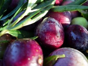 Provencal Olives