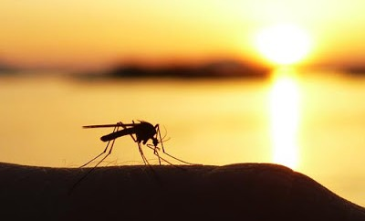 mosquito-sunset