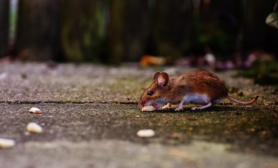 mouse-1708183_1280