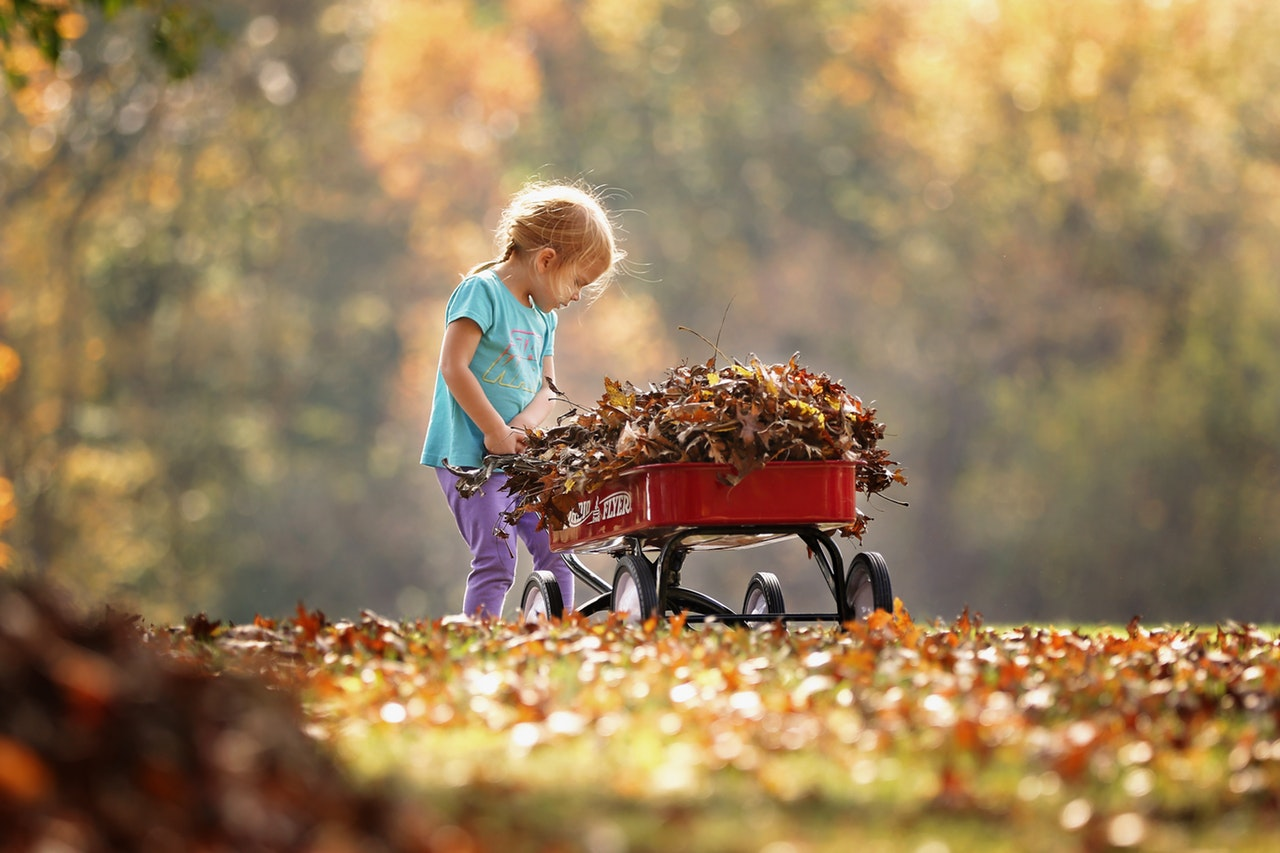 Four Tips for a Great Fall Garden